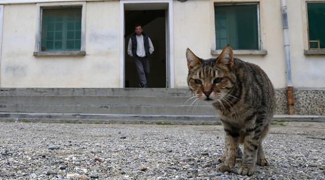 Gözaltındaki 'kurye' kedi hapishaneden kaçtı