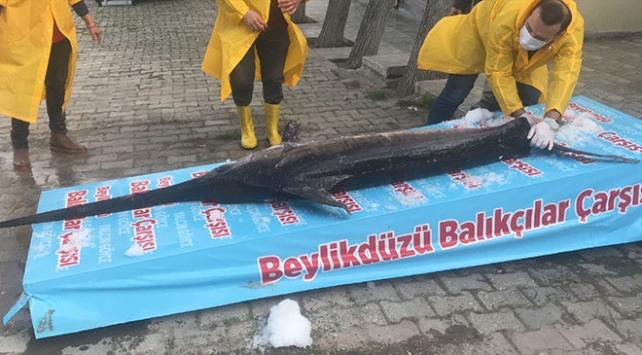 Marmara Denizi'nde 3 metrelik kılıç balığı yakalandı