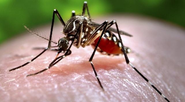 Sudan'ın batısında 'Chikungunya ateşi' hastalığı nedeniyle acil durum ilan edildi